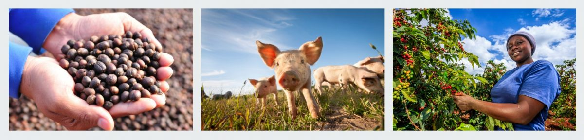 MVO advies levensmiddelenindustrie